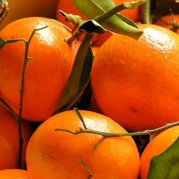 Parfum pour Bougies - Mandarine