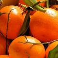 Parfum pour Bougies - Mandarine 0