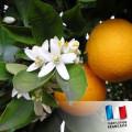 Parfum Pour Bougies 30 ml - Fleur d'oranger 0