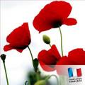 Parfum pour bougies - Coquelicot 30 ml 0