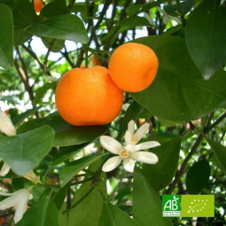 Huile essentielle bio de mandarine rouge 10ml