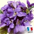 Parfum Violette pour bougies 0