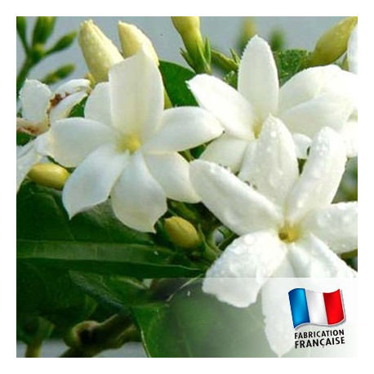 Parfum pour Bougie - Jasmin