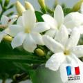 Parfum pour Bougie - Jasmin 0
