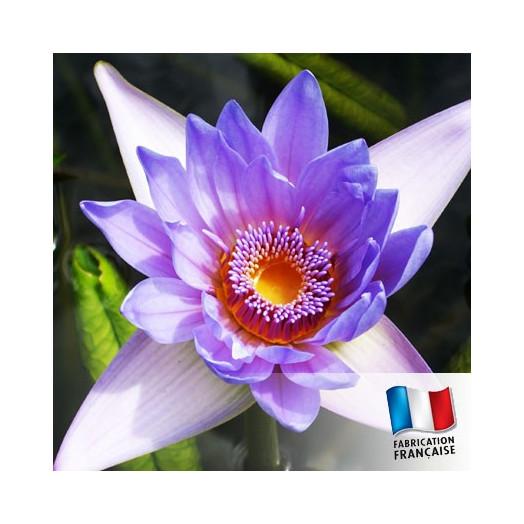 Parfum pour Bougie - Fleur des Iles