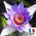 Parfum pour Bougie - Fleur des Iles 0
