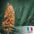 Parfum pour Bougies - Pin des landes 0