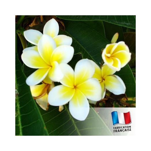 Huile de Parfum pour Bougies - Monoï Tahiti