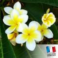 Huile de Parfum pour Bougies - Monoï Tahiti 0