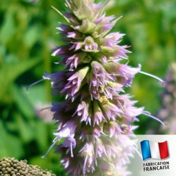 Parfum pour Bougies Patchouli Poivré