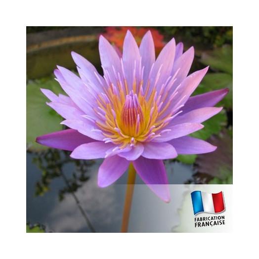 Parfum Pour bougies - Fleur de Lotus