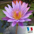 Parfum Pour bougies - Fleur de Lotus 0