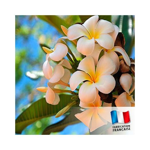 Parfum Pour Bougies Fleur De Tiare Fabrication De Bougies