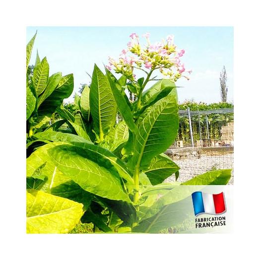 Parfum pour Bougies - Feuilles de Tabac