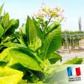 Parfum pour Bougies - Feuilles de Tabac 0