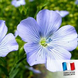 Parfum pour Bougies - Fleur de lin