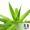 Parfum pour Bougies - Aloe Vera 1