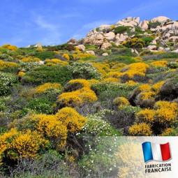 Parfum pour Bougies - Maquis Corse