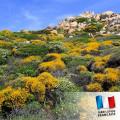 Parfum pour Bougies - Maquis Corse 0