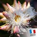 Parfum pour Bougies - Eucalyptus 0