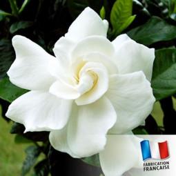 Parfum pour Bougies - Gardenia