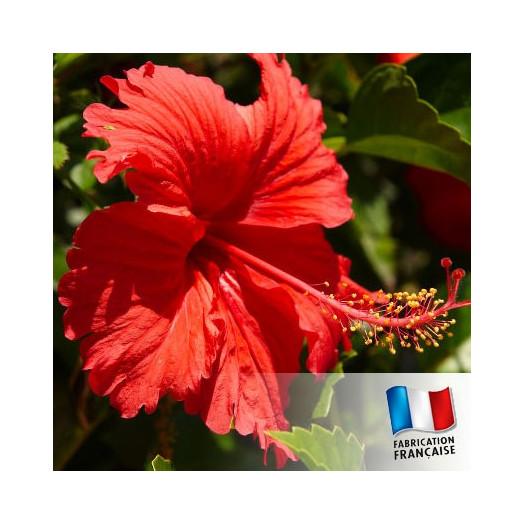 Parfum pour Bougies - Hibiscus