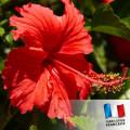 Parfum pour Bougies - Hibiscus 0