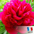 Parfum pour Bougies - Magnolia 0