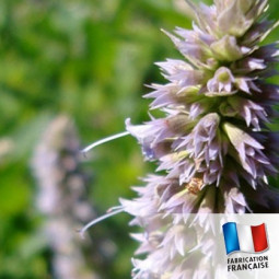 Parfum pour Bougies - Patchouli