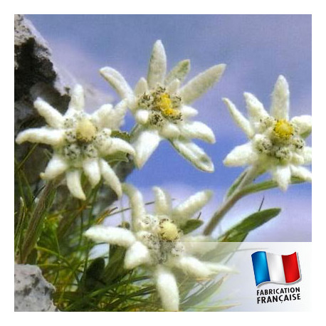 Parfum pour Bougies - Edelweiss