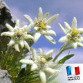 Parfum pour Bougies - Edelweiss 0