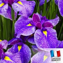 Parfum pour bougies - Iris