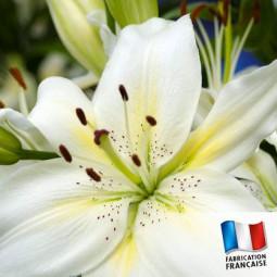 Parfum pour bougies - Lys Blanc