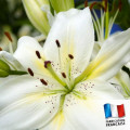 Parfum pour bougies - Lys Blanc 0