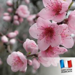Parfum Fleur de cerisier