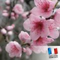 Parfum Fleur de cerisier 0