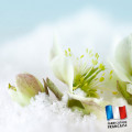Parfum pour bougies - Nectar d'hiver 0