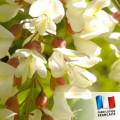 Parfum pour bougies - Acacia 0