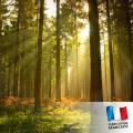 Parfum pour bougies - Ballade en forêt 0