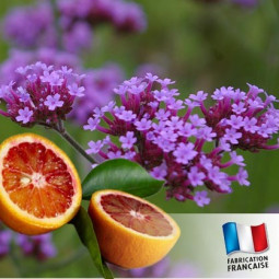 Parfum pour bougies - Verveine et orange sanguine