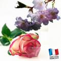 Parfum pour bougies - Modele 0