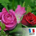 Parfum pour bougies - Rose des jardins 0