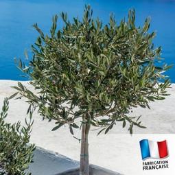 Parfum pour bougies - Bois d'olivier